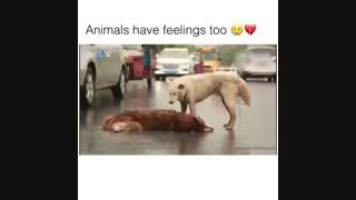 حیوانات هم احساسات  دارن :(