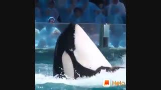 بازی با دلفین