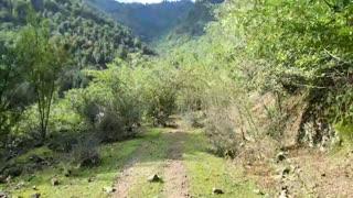 تونلی از درختان انار واقع در جنگل روستای پلنگ دره آلیان (آبان سال 98)