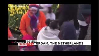 ۲۰۰ هزار شاخه گل لاله میدان معروف آمستردام