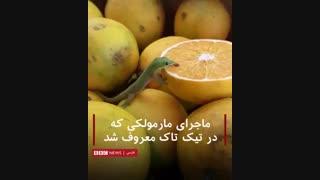 """مارمولک کوچک سبز که """"فارغ ز غوغای جهان"""" یک پرتقال را لیس میزند"""