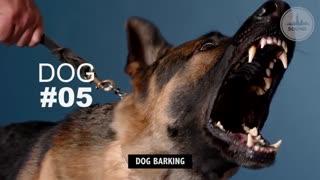 صداهای متفاوت سگها بر اساس نژادشون
