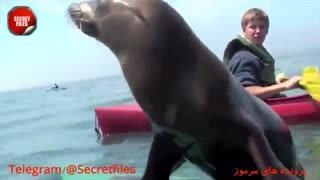 5 لحظه تکان دهنده و جالب هنگام ماهیگیری! [قسمت 3] (مستند کوتاه) زیرنویس+توضیحات