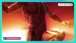 چگونه عضلات خوش فرمی داشته باشیم؟