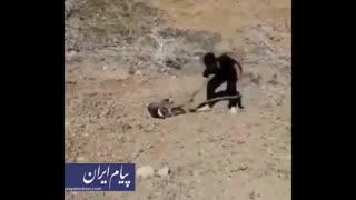 صحنه های دلخراش از خشونت علیه حیوانات