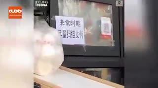 ابتکار فروشندگان چینی برای محافظت از خود در برابر کرونا