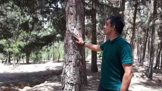 اگر یک درخت عصبانی شود