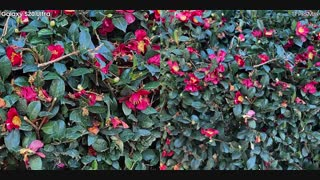 مقایسه ویدیویی دوربین آیفون 11 پرو مکس در مقابل گلکسی اس 20 الترا