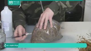 اصول پرورش قارچ  در خانه-تولید قارچ  صدفی