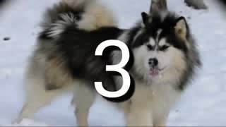 8 تا از خطرناکترین سگ های دنیا