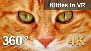 کافه گربهها : مسکو