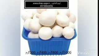 فروش ظروف بسته بندی قارچ