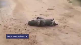تلاش گربه وحشی برای فرار از مار بوآی غول پیکر
