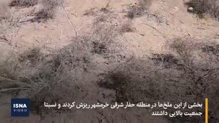 مبارزه با هجوم ملخها در آبادان و خرمشهر