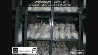 فروش انواع  بذر قارچ
