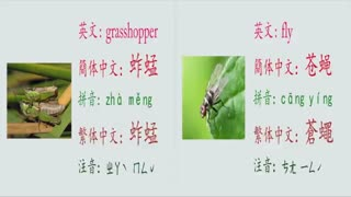 [Learn Chinese] How to say: various species of insects in Chinese