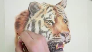 ✅ آموزش نقاشی ببر با تکنیک مدادرنگی