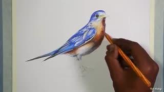✅ آموزش نقاشی پرنده خوش آواز مشرقی با مدادرنگی