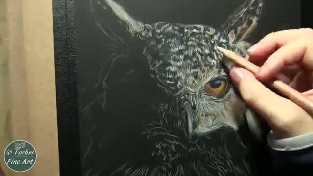 آموزش نقاشی رئال جغد شاخدار با مدادرنگی