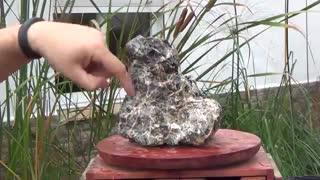 آموزش ساخت بونسای ریشه روی سنگ