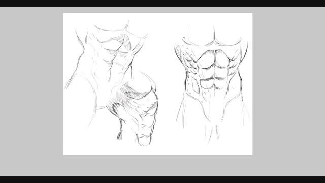 آموزش طراحی عضلات شکم